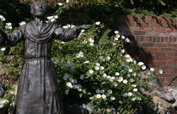 Statue of St. Francis in front of flowering bush